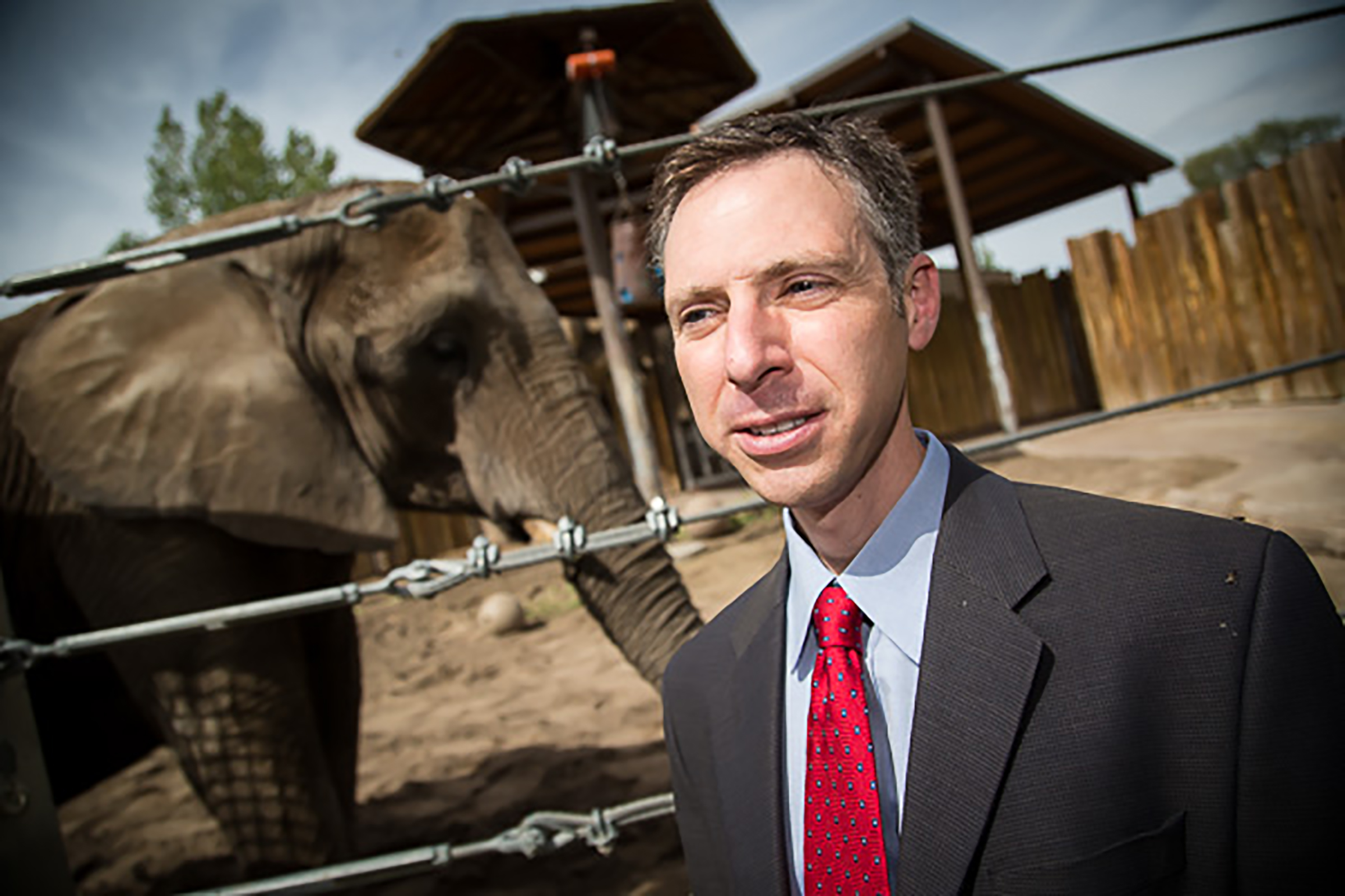 Joshua Schiffman, M.D., pediatric oncologist at the Huntsman Cancer Institute at the University of Utah, has led a study that could explain why elephants rarely get cancer. Elephants have extra copies of a gene that encodes a well-defined tumor suppressor, p53. Elephants may also have a more robust mechanism for killing damaged cells that are at risk for becoming cancerous. The findings could lead to new strategies for treating cancer in humans.