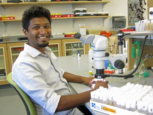 Nitin Phadnis, a University of Utah assistant professor of biology, has published a paper in the journal Science identifying a long-sought gene involved in forming new species. The gene normally kills hybrids of two closely related species of fruit flies, keeping the two species distinct.