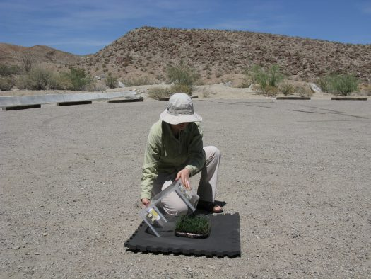 Elizaveta Litvak at the Steele/Burnand Anza-Borrego Desert Research Center in California, one of the hottest, driest areas of the US. The conditions simulated the arid Santa Ana winds.